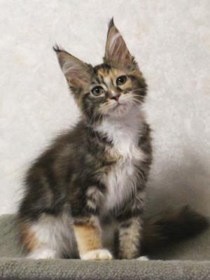 Waco_kitten2_17071901