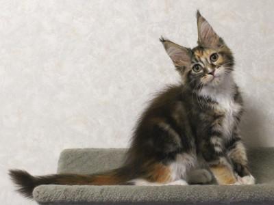 Waco_kitten2_17071902
