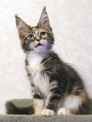 Waco_kitten2_17071904