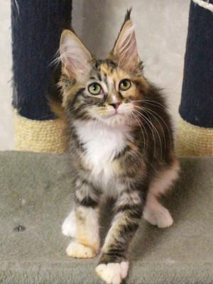 Waco_kitten2_17071905