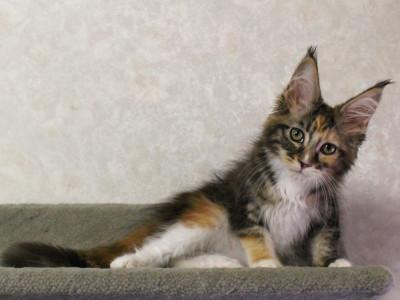 Waco_kitten2_17071906