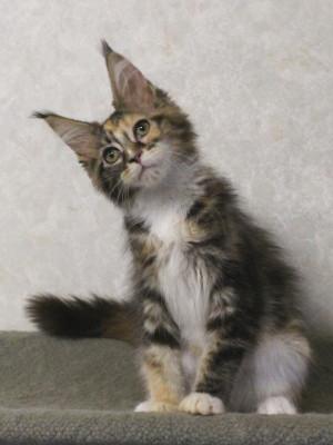 Waco_kitten2_17071908