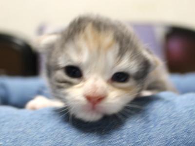 Olive_kitten1_15101801