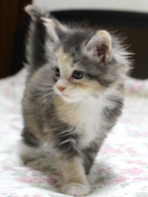 Olive_kitten1_15110807