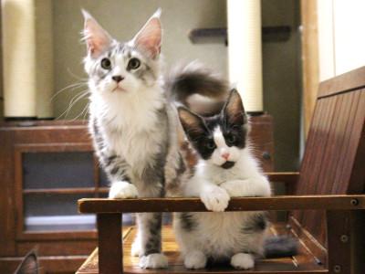 Kittens_18081201