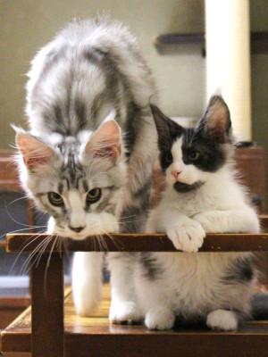 Kittens_18081202