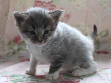 Shizuku_kitten3_042104