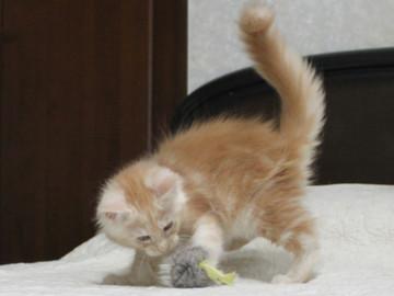 Mimi_kitten1_091502