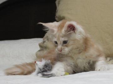 Mimi_kitten1_091505