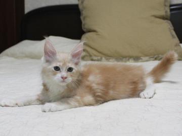 Mimi_kitten2_091502