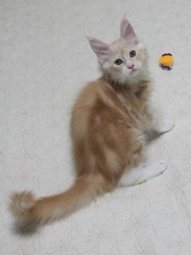 Mimi_kitten2_091507
