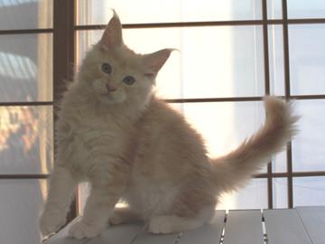 Mimi_kitten1_092504