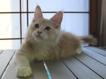 Mimi_kitten2_092505