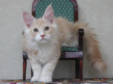 Mimi_kitten2_100907