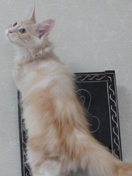 Mimi_kitten2_101405