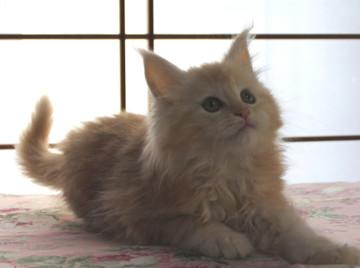 Blossom_kitten2_040801