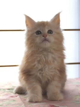 Blossom_kitten2_040802