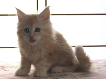 Blossom_kitten2_040803