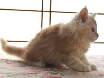 Blossom_kitten2_040804