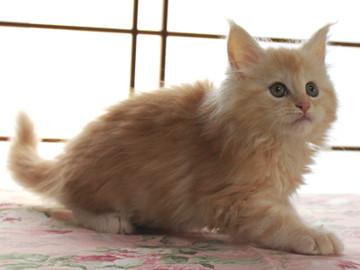 Blossom_kitten2_040805