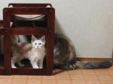 Blossom_kitten3_041405