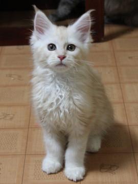Blossom_kitten3_041406