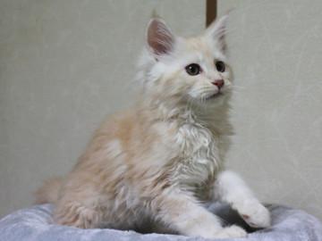 Blossom_kitten3_041408