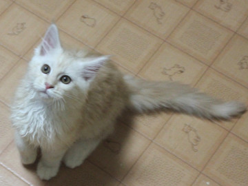 Blossom_kitten3_043001