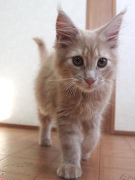 Blossom_kitten5_050201