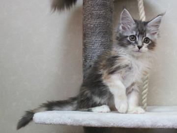 Blossom_kitten4_041903