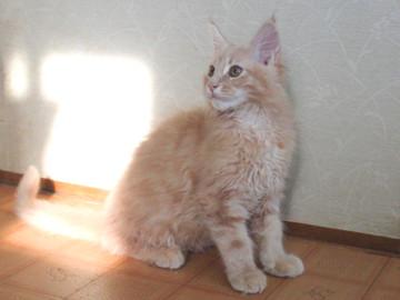 Blossom_kitten5_050202