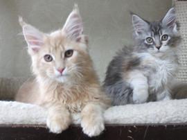 Blossom_kittens_050301