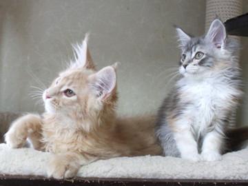Blossom_kittens_050303