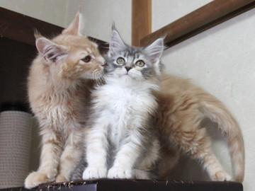 Blossom_kittens_050304