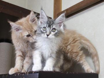 Blossom_kittens_050305