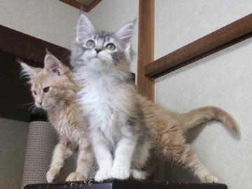 Blossom_kittens_050306