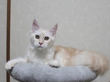 Blossom_kitten3_061803