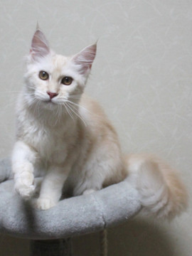 Blossom_kitten3_061804
