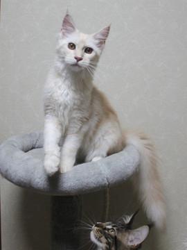 Blossom_kitten3_061805