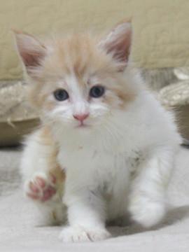 Aurora_kitten2_072401