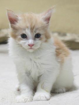 Aurora_kitten2_072403