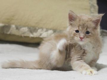 Aurora_kitten3_072403