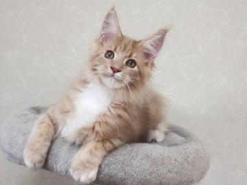 Aurora_kitten3_092401