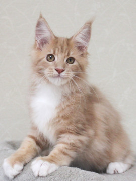 Aurora_kitten3_092402