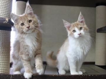 Aurora_kittens_101404
