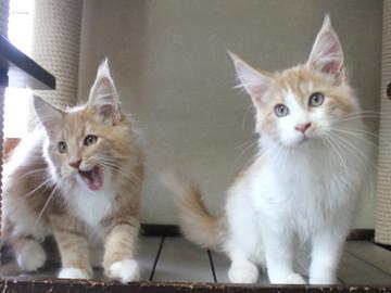 Aurora_kittens_101405