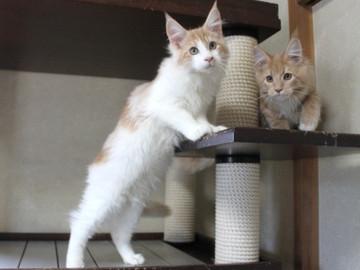 Aurora_kittens_101406