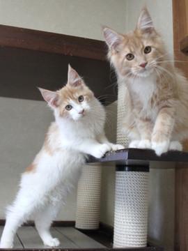 Aurora_kittens_101407