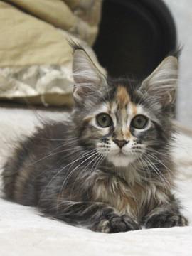 Misora_kitten1_101501