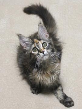 Misora_kitten1_13103002